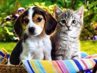 Sau khi phẩu thuật thú cưng cần chăm sóc như thế nào? - Thức ăn cho thú cưng | nanapet | Scoop.it
