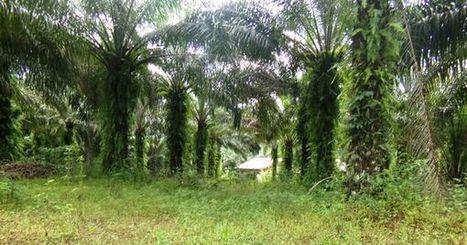 Tayap, le village écologique qui crée des emplois verts au Cameroun | Actualités Afrique | Scoop.it