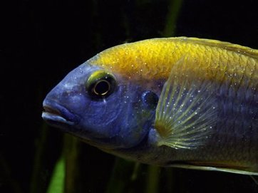How to solve a problem like whitespot | Features | Practical Fishkeeping | Animal Management | Scoop.it