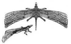 Un reptile possédait-il des plumes avant l'arrivée des dinosaures ? | Aux origines | Scoop.it