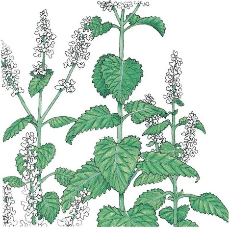 Herbs A-Z: C is for Catnip! Everyone knows that... | Simply Grow Great Food | Scoop.it