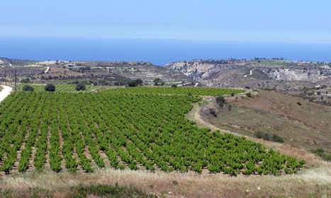 Chipre con sabor autóctono - Viñedos Ancestrales  | Wine Cyprus | Scoop.it