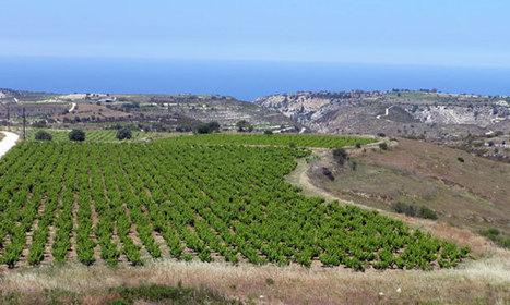 Chipre con sabor autóctono - Viñedos Ancestrales | Wine Cyprus | Scoop.it