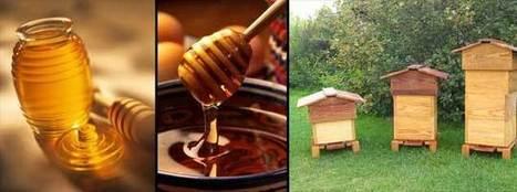 Les vertus du miel et ses bienfaits : santé, bio, diabète | Bien manger | Scoop.it