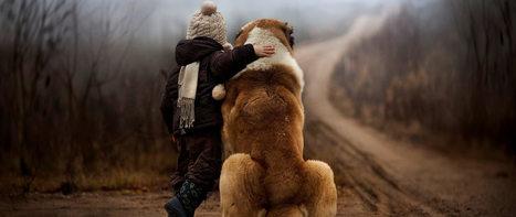 Prodaja pasa | Psi na prodaju | Oglasi za pse | Pas na prodaju | Apartmani Beograd | Scoop.it