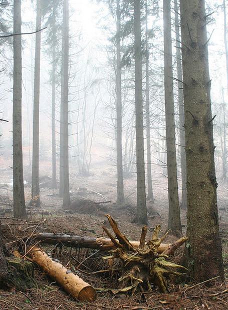 Pour les gardes de l'ONF, le bonheur n'est plus dans le bois | Nouveaux paradigmes | Scoop.it