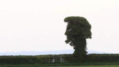 Elvis Presley apparaît dans un arbre   Mais n'importe quoi !   Scoop.it