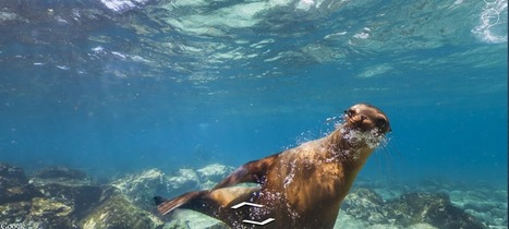 Travel to the Galapagos, With Google Street View | Serna Evolution | Scoop.it