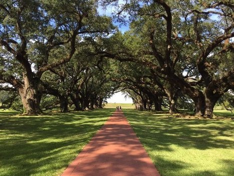 Tweet from @amtess98 | Oak Alley Plantation: Things to see! | Scoop.it