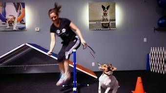 Exercise class welcomes dogs too | Melbourne & Victoria | Scoop.it