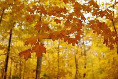 Chicago Area: Colors of Autumn | The Miracle of Fall | Scoop.it