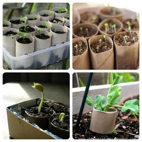 Cómo hacer semilleros con cartón del papel higiénico | Permacultura, Agricultura Organica, Huertos Urbanos, Horticultura, bosques de alimentos y otros BIO | Scoop.it