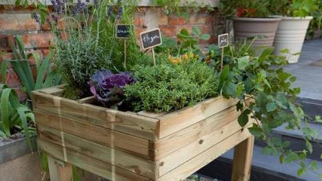 Potager. La consoude, un engrais naturel hors pair | pour mon jardin | Scoop.it