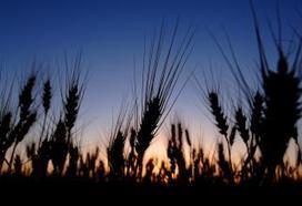 Plains wheat sliding; markets watching | Bugs have benefits | Scoop.it