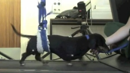 Nose cell transplants allow paralyzed dogs to walk again | Longevity science | Scoop.it
