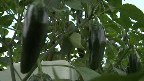 Hydroponic Farming | WNEP.com — Scranton / Wilkes-Barre ... | My Garden | Scoop.it