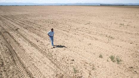 California's Thirsting Farmland | Restaurant Industry News | Scoop.it