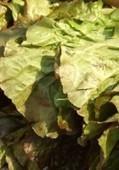 Plow To Porch Organics | Santa Barbara Business Directory | SantaBarbara Business Directory | Scoop.it