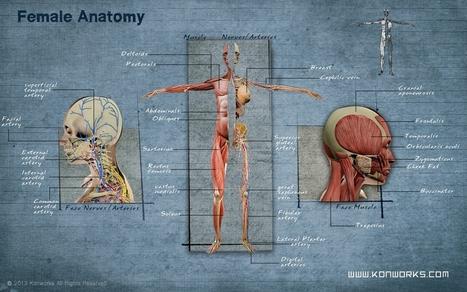 Human Body - iPad App | 3D Animation | Scoop.it
