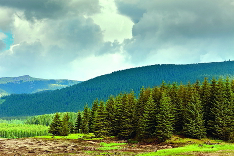 Romania Vows to Restore Ravaged Forests :: Balkan Insight | 100 Acre Wood | Scoop.it