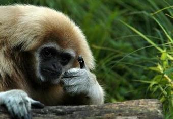 15 Photos of Animals Being Awesome - Weird Worm | Weirdest Animal Behaviors | Scoop.it