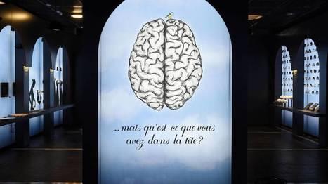 RTBF.be | Notre cerveau fonctionne plus ou moins bien selon les saisons | L'actualité de l'Université de Liège (ULg) | Scoop.it