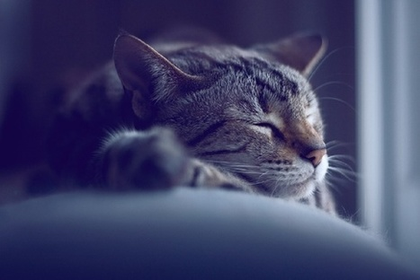 Why Some People Respond to Stress by Falling Asleep | Creatively Aging | Scoop.it