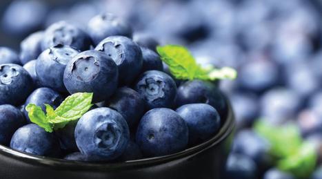 Blueberries Boost Longevity Beyond Calorie Restriction - Life Extension | Long Life | Scoop.it