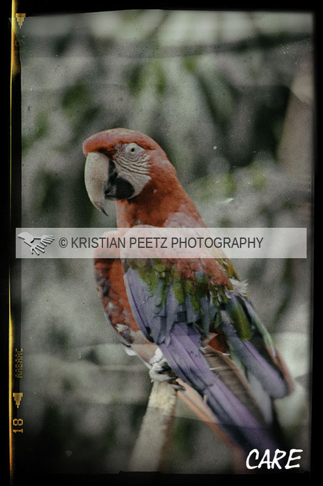 Latin-Point Photography By Kristian Peetz: Parrot | All things about Photography | Scoop.it