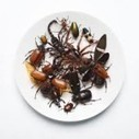 entomophagy, eating insects, eating bugs, bugs, insects, food, bugs as food | Entomophagy: Edible Insects and the Future of Food | Scoop.it