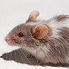 Iran sends out snipers to dispatch rats   No Such Thing As The News   Scoop.it