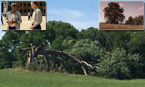 Famous tree from The Shawshank Redemption has fallen over | Winning The Internet | Scoop.it