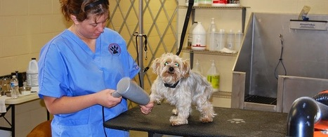 Country Inn Kennel and Cattery: Find Quality Dog Boarding Services for Your Dog Near Chapel Hill | Country Inn Kennel and Cattery | Scoop.it