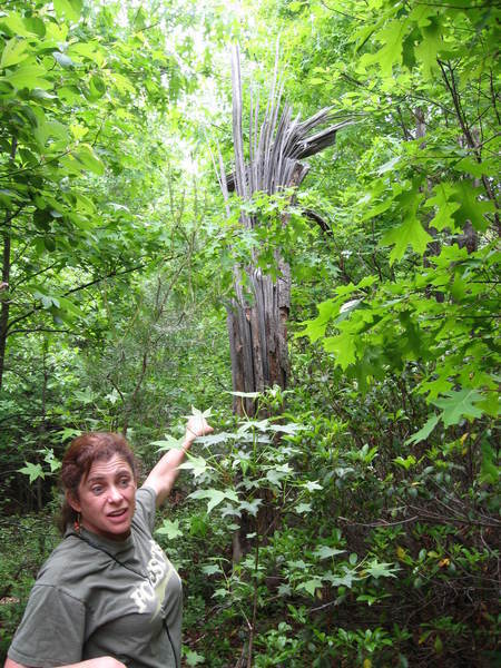 'BioBlitz' tallies plant, animal bounty on University of Maryland 'hillock' | Urban, Suburban, and Campus Forests: Conservation and Curation | Scoop.it
