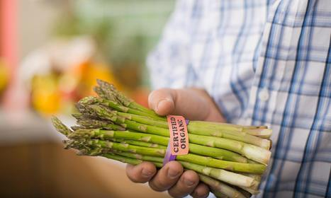 UK demand for asparagus soars by 540% over a decade | UK Food | Scoop.it