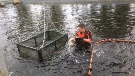 Dordogne : Caviar Huso augmente son capital de 4 millions d'euros - Francetv info | Strategie Export | Scoop.it