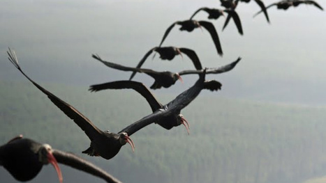 Why do birds fly in a V formation?   Strange days indeed...   Scoop.it