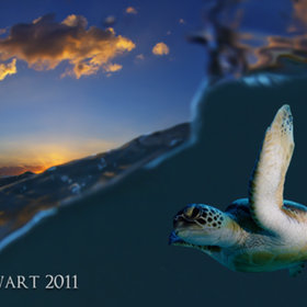 Stunning !!! #Photo Turtle At Sunset | Scoop Photography | Scoop.it
