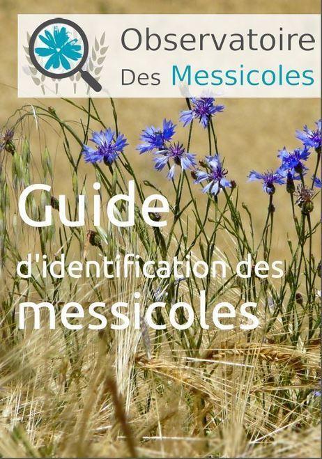 L'observatoire des messicoles | Environnement, paysage et biodiversité | Scoop.it