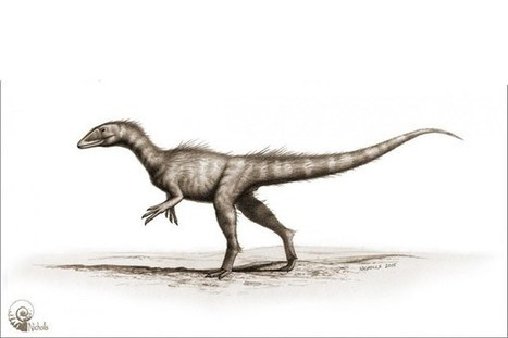 Tiny Welsh therapod is world's earliest Jurassic dinosaur | NetGeology | Scoop.it