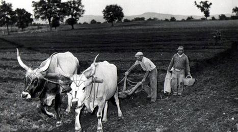 Sulle terre della riforma: agristoria.it | Généal'italie | Scoop.it