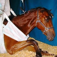 Horse Diseases - The Top Two Most Common - Complete Horse Care | all things horsey | Scoop.it