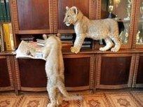 Необычные домашние животные - TOP News.RU | природа | Scoop.it