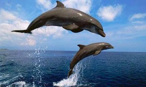 @marcthevet If ur loving #spyinthepod pls #ff  @CoveGuardians @SeaShepherds | Rescue our Ocean's & it's species from Man's Pollution! | Scoop.it