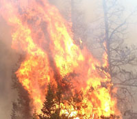 Russia blames al-Qaeda for European forest fires | Timberland Investment | Scoop.it