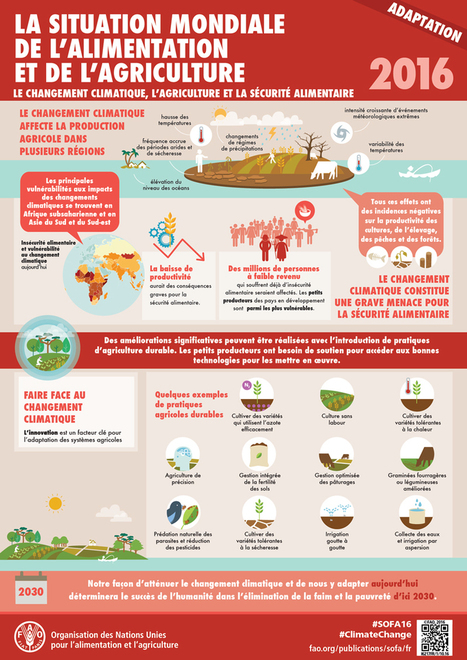 La situation mondiale de l'alimentation et de l'agriculture   Autour de l'agroécologie...   Scoop.it