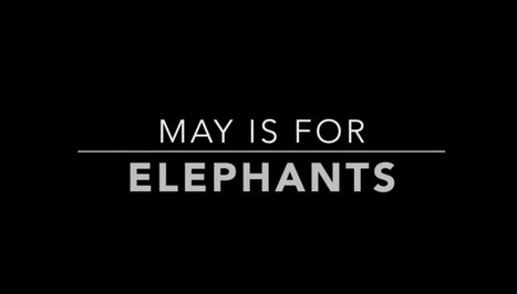 Please Sign: May is for Elephants - YouTube | Wildlife Trafficking: Who Does it? Allows it? | Scoop.it