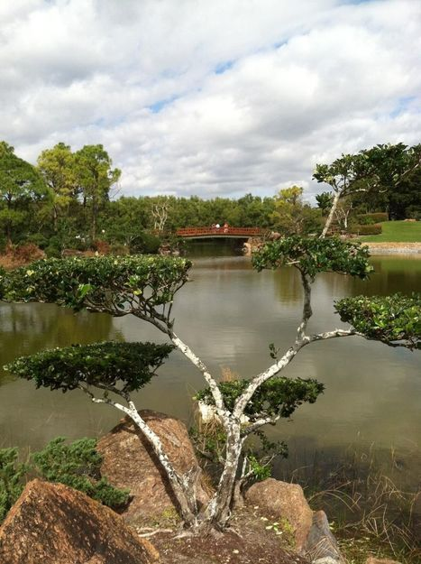 Serenity Now: Morikami Japanese Gardens in South Florida - Fox News | Japanese Gardens | Scoop.it