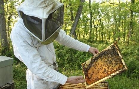 Pourquoi la récolte de miel est catastrophique en France cette année? | Chronique d'un pays où il ne se passe rien... ou presque ! | Scoop.it