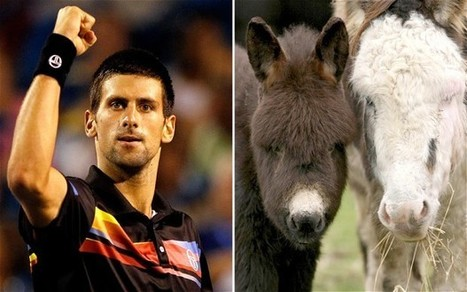 Novak Djokovic buys up annual supply of donkey cheese - Telegraph | #ECON3 | Scoop.it